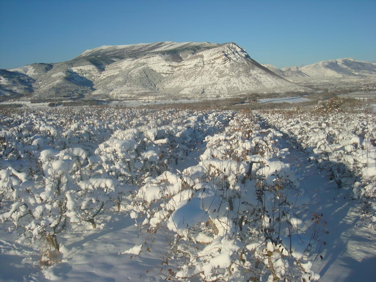 2008 Pommiers en décembre